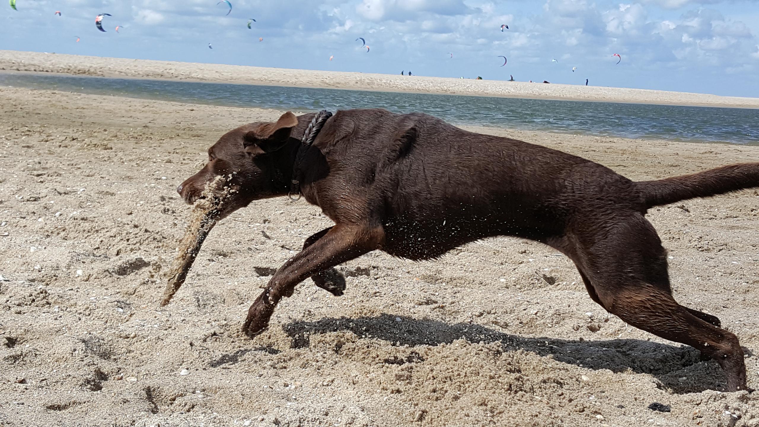 Hund Sprung Kraft