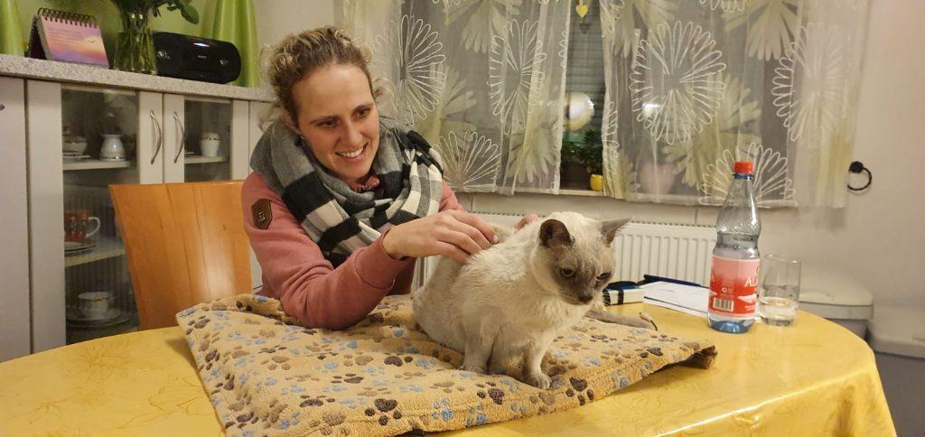 Katze Behandlung Kipplerfalte
