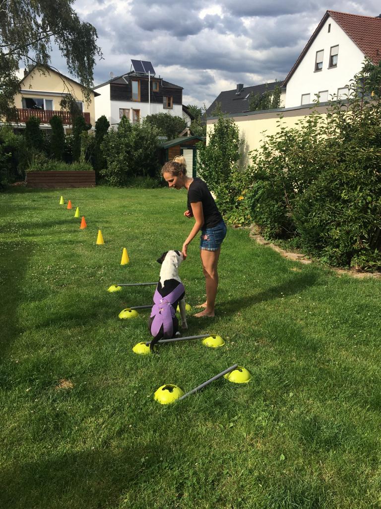 Hund Gangbild Training Garten
